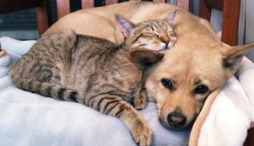 犬猫同居➡︎仲良く暮らす方法