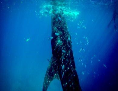 日本の捕鯨再開➡︎賛成?反対?